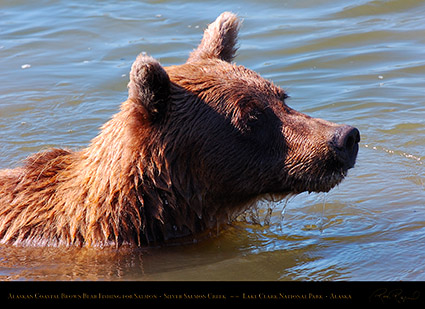 BrownBear_ClosePortrait_HS3015