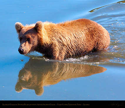 BrownBear_CrossingCreek_HS2760M