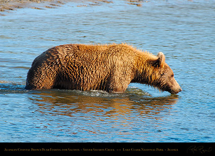 BrownBear_Fishing_X3750