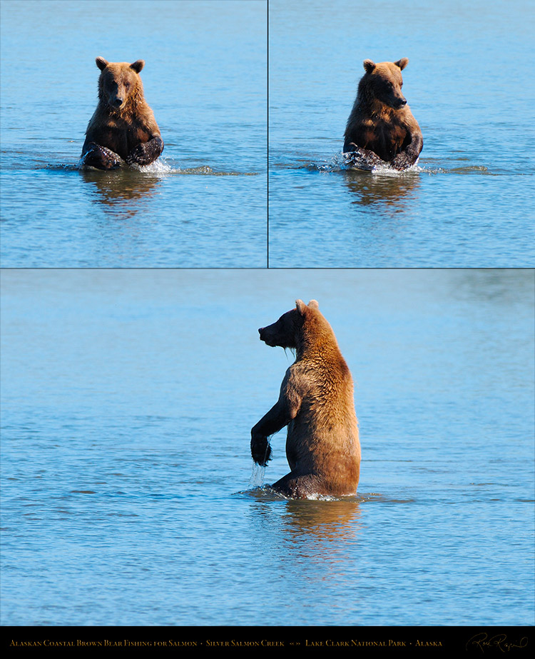 BrownBear_Fishing_XL