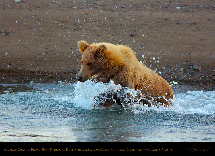 BrownBear_Fishing_atDusk_X3608