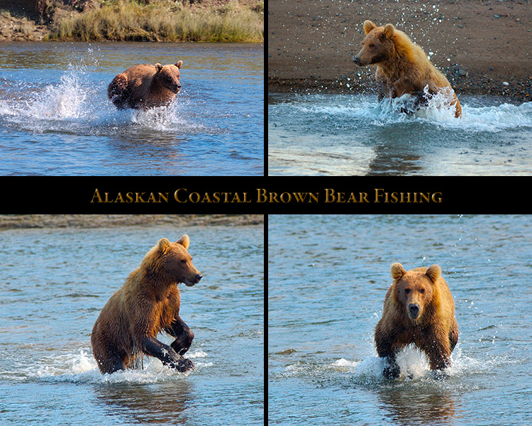 BrownBear_Fishing