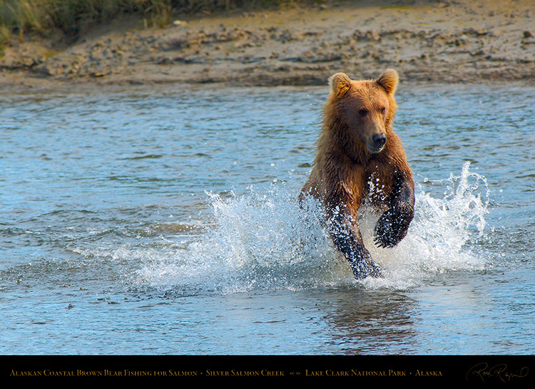 BrownBear_Fishing_X3002