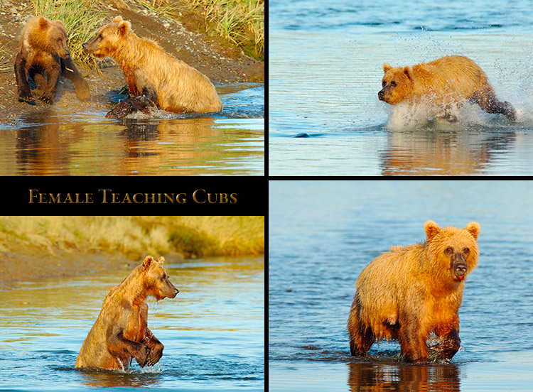Female_TeachingCubs