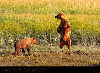 BrownBear_GoldenFemale_andCub_HS2306