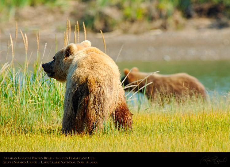 BrownBear_GoldenFemale_andCub_X2802