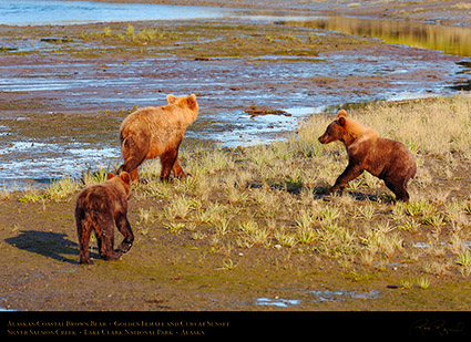 BrownBear_GoldenFemale_andCubs_HS2313