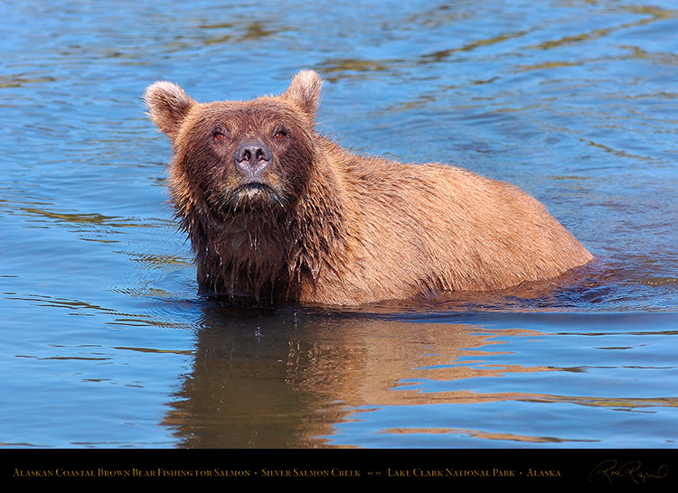 BrownBear_Fishing_HS3066