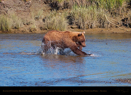 BrownBear_CatchingSalmon_HS2927