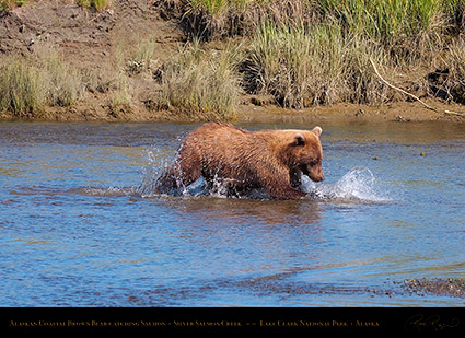 BrownBear_CatchingSalmon_HS2928