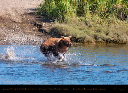 BrownBear_Fishing_HS2891
