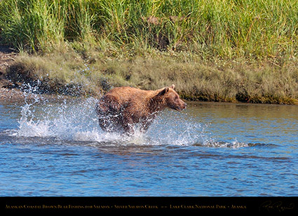 BrownBear_Fishing_HS2892