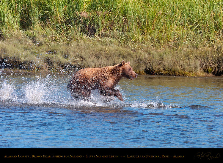 BrownBear_Fishing_HS2893