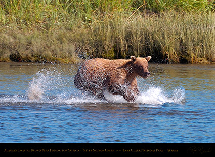 BrownBear_Fishing_HS2895