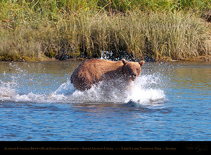 BrownBear_Fishing_HS2896