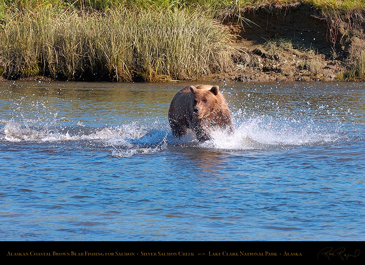 BrownBear_Fishing_HS2898