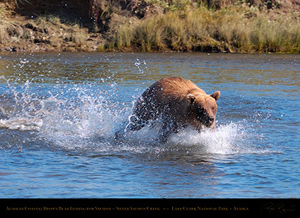 BrownBear_Fishing_HS2901