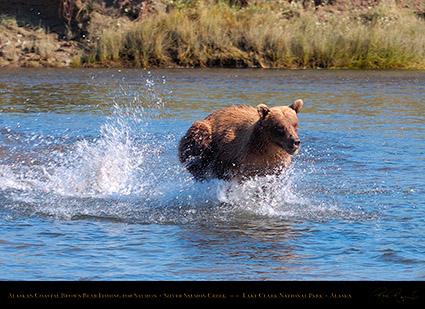 BrownBear_Fishing_HS2902