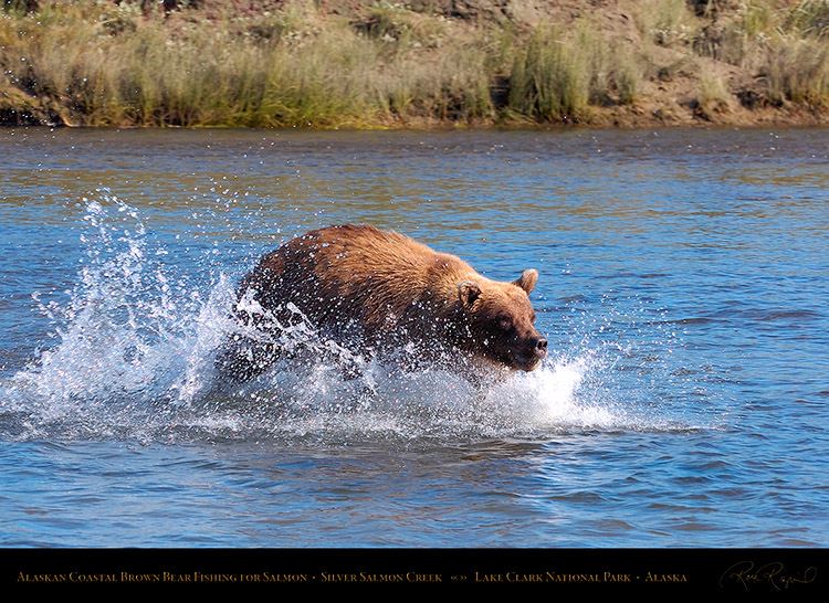 BrownBear_Fishing_HS2903