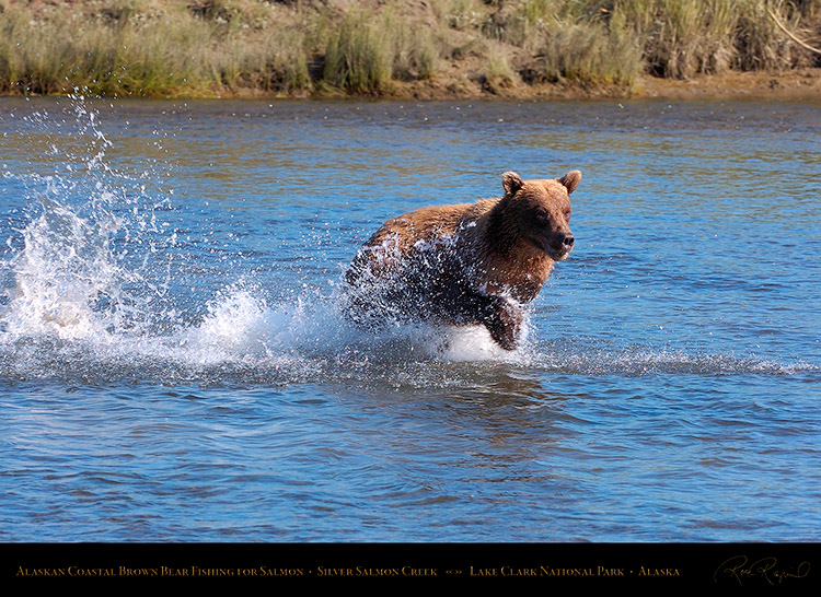 BrownBear_Fishing_HS2905