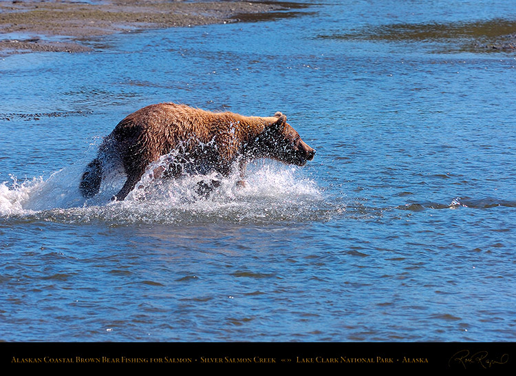 BrownBear_Fishing_HS2916