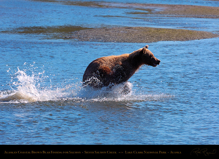 BrownBear_Fishing_HS2917