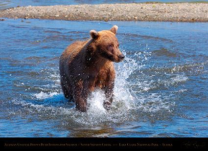 BrownBear_Fishing_HS2939