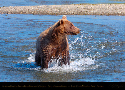 BrownBear_Fishing_HS2941