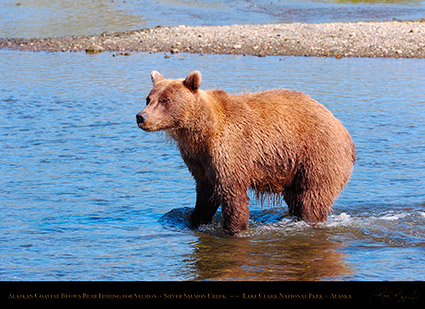 BrownBear_Fishing_HS2949