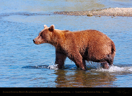 BrownBear_Fishing_HS2951