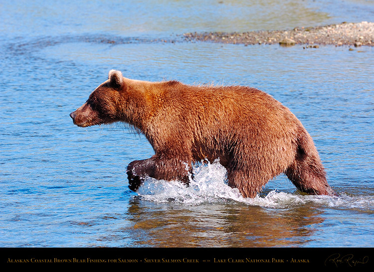 BrownBear_Fishing_HS2952