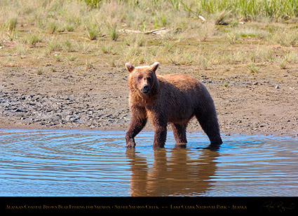 BrownBear_Fishing_HS2963