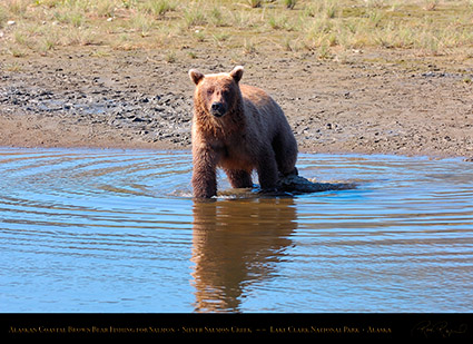 BrownBear_Fishing_HS2968