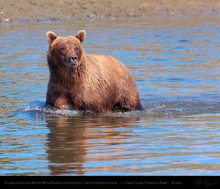 BrownBear_Fishing_HS3040M