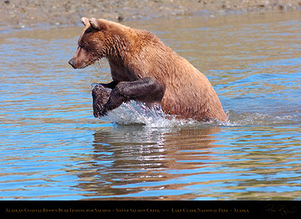 BrownBear_Fishing_HS3041