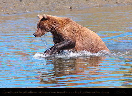 BrownBear_Fishing_HS3042