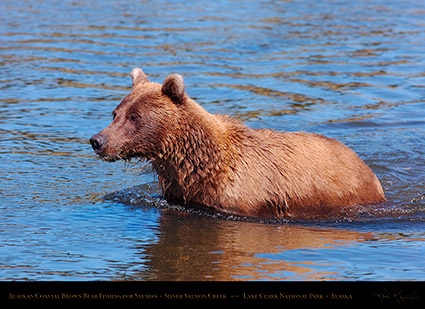 BrownBear_Fishing_HS3055