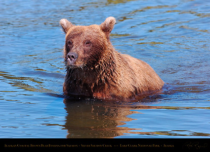 BrownBear_Fishing_HS3063