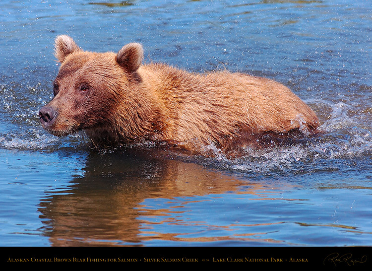 BrownBear_Fishing_HS3083