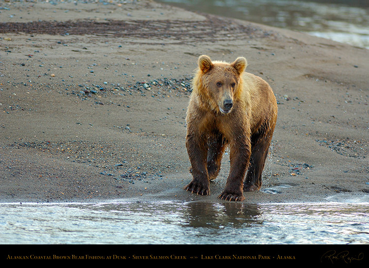 BrownBear_Fishing_atDusk_X3602