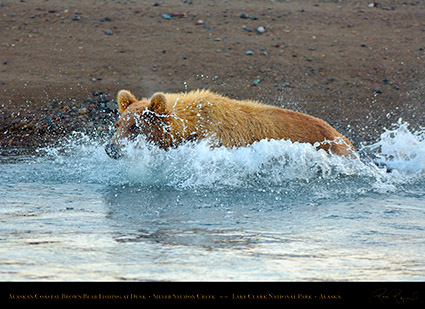 BrownBear_Fishing_atDusk_X3604