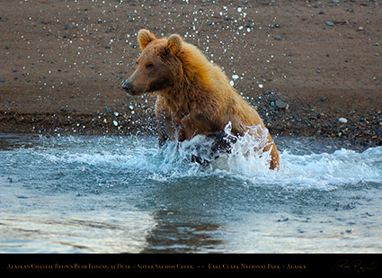 BrownBear_Fishing_atDusk_X3607
