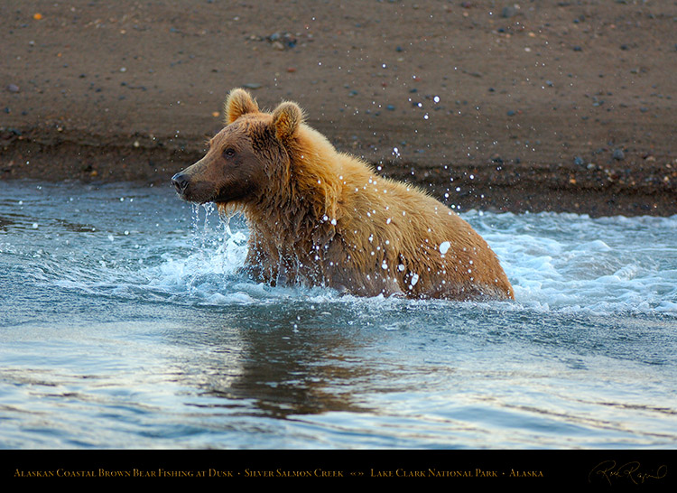 BrownBear_Fishing_atDusk_X3612