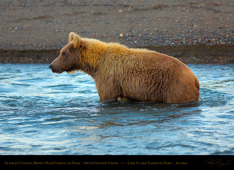BrownBear_Fishing_atDusk_X3620