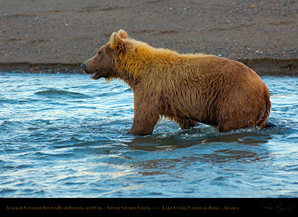 BrownBear_Fishing_atDusk_X3621