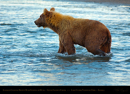 BrownBear_Fishing_atDusk_X3622