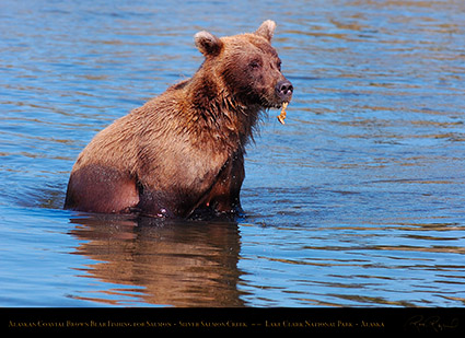 BrownBear_withLeaf_HS3054
