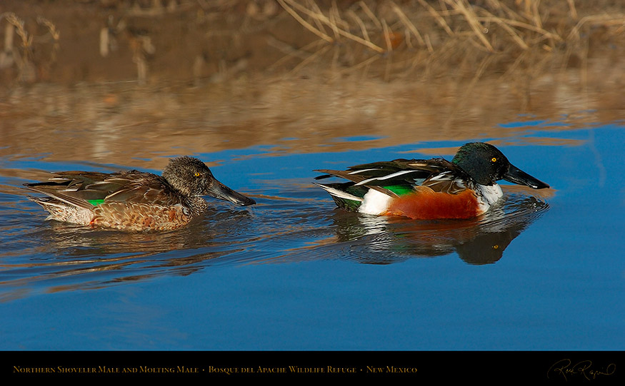 NorthernShovelers_1754_16x9