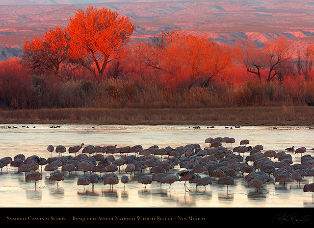 Bosque_del_Apache_Sandhills_at_Sunrise_HS1061