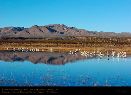 Bosque_Crane_Pool_Chupaderas_3367